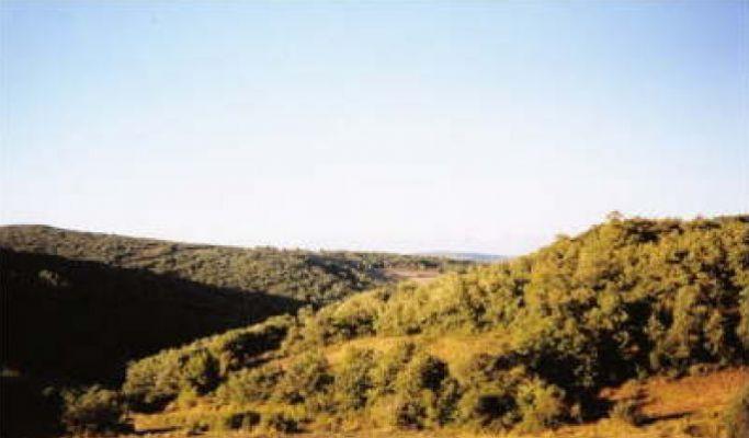 https://www.navamuel.es/images/Vistas/Bosques.jpg